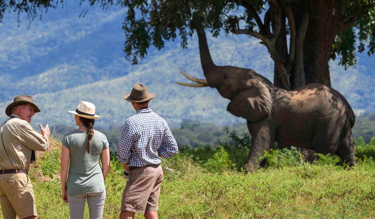 Featured photo for Zambezi Elephant Fund blog post